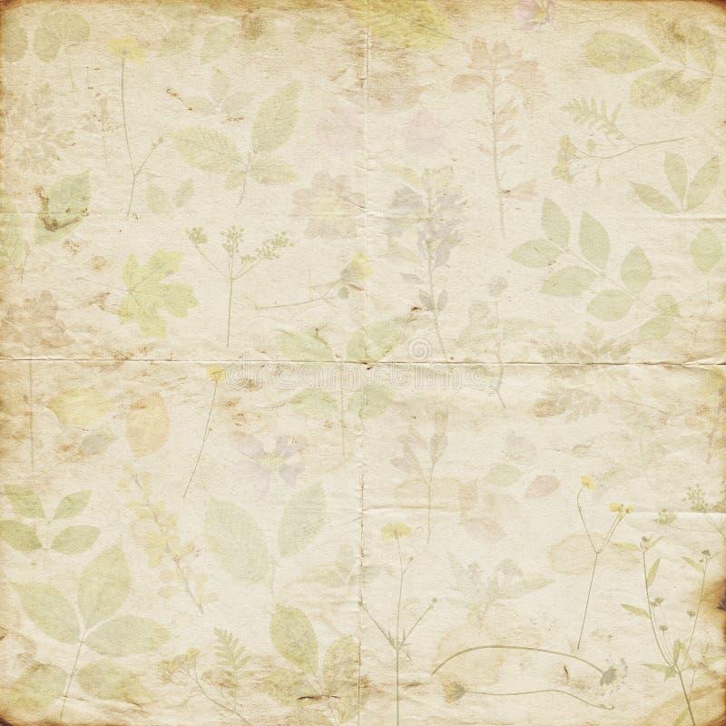 老破旧的退色的干被按的花卉样式纸背景 免版税库存照片