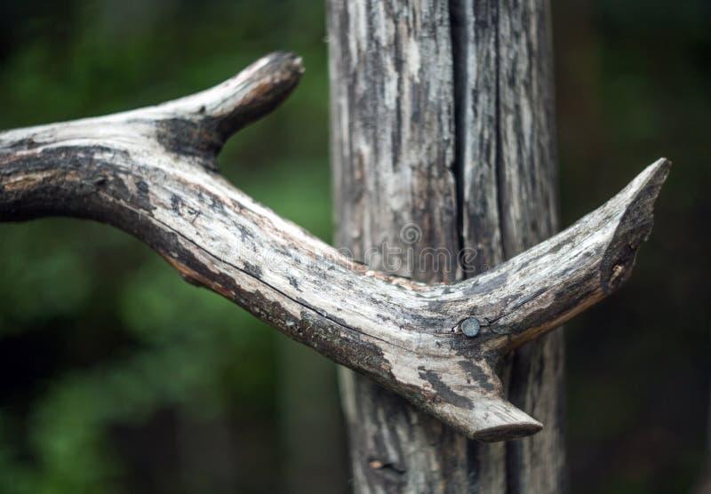 老破裂的木曲线射线钉牢了到篱芭岗位 免版税库存图片