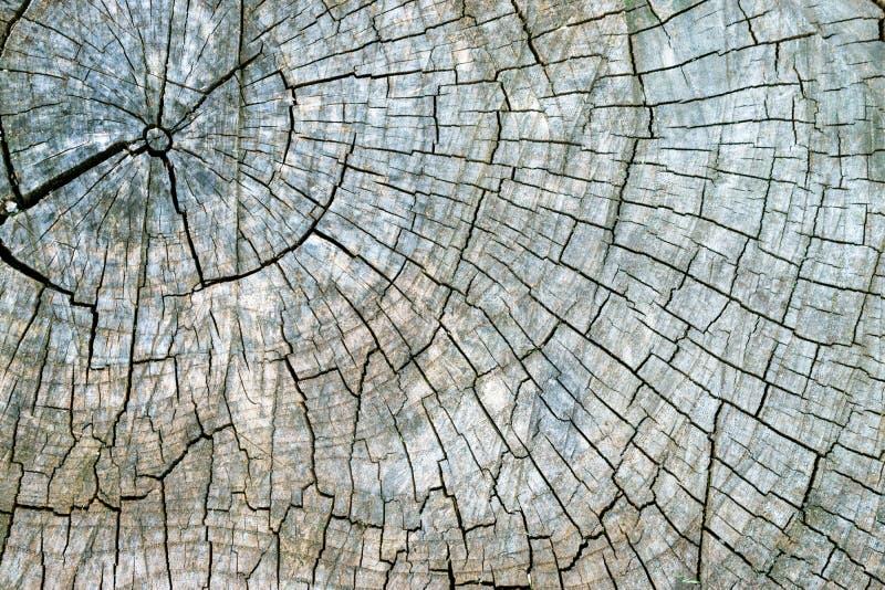 老破裂的树桩纹理背景 与一本被切开的日志的横断面的被风化的木纹理与同心年鉴的 免版税库存图片