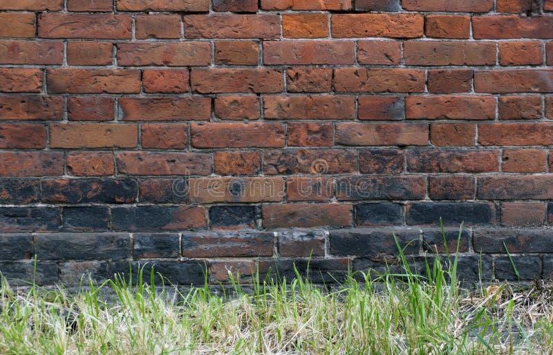 老红砖墙壁难看的东西背景纹理绿色的表面 免版税库存照片