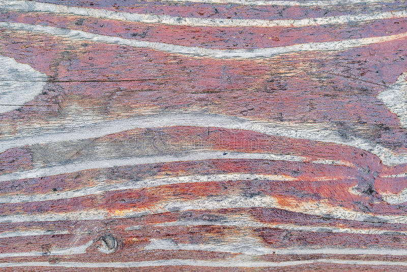 老红色木被涂清漆的纹理 库存图片