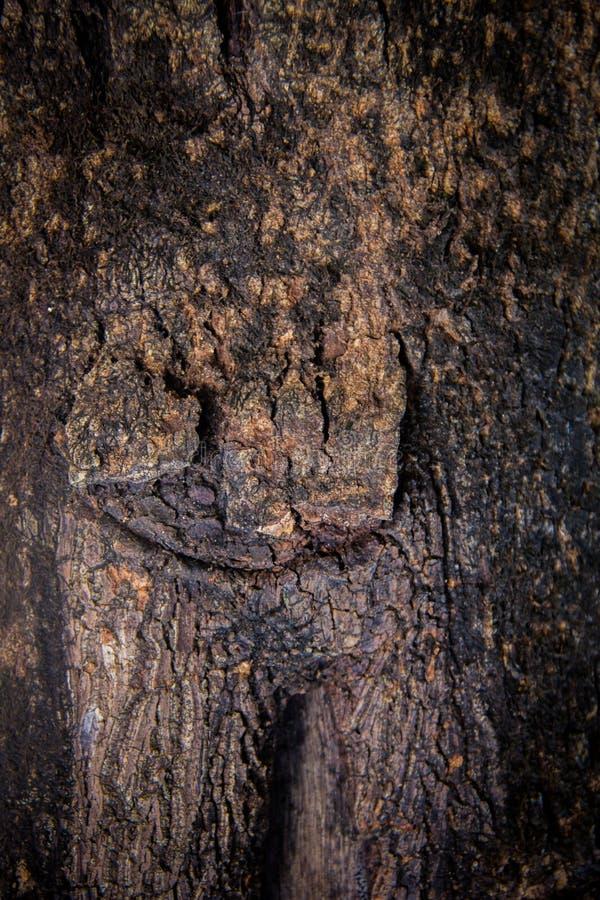 老纹理树 库存照片