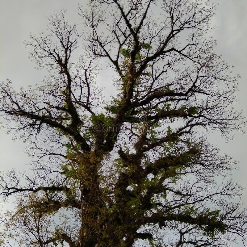 老结构树 免版税库存照片