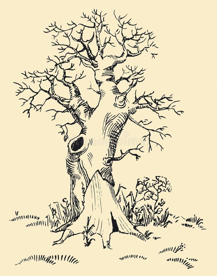 老结构树 皇族释放例证