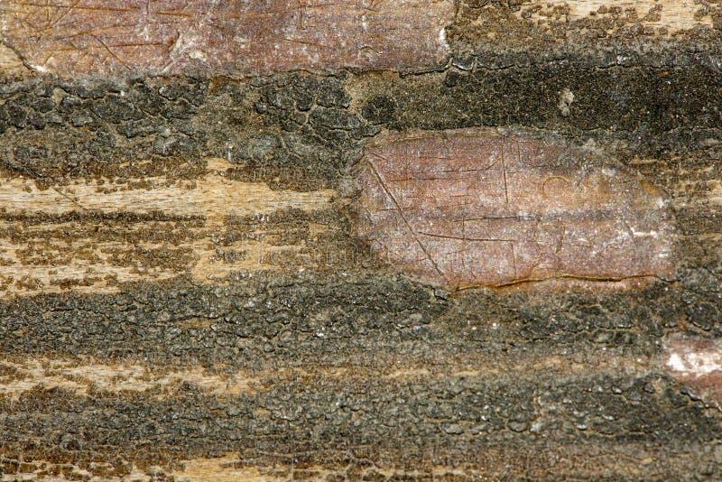 老肮脏和被抓的木头13 免版税库存图片