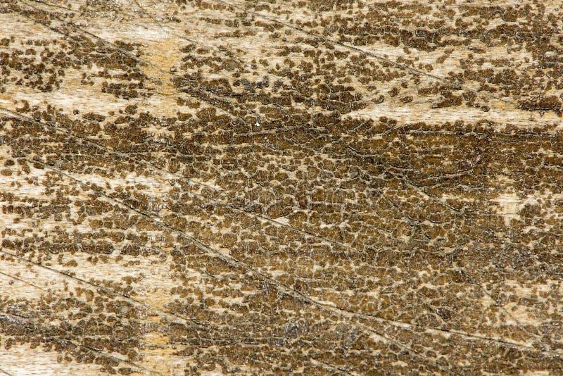 老肮脏和被抓的木头16 免版税库存图片