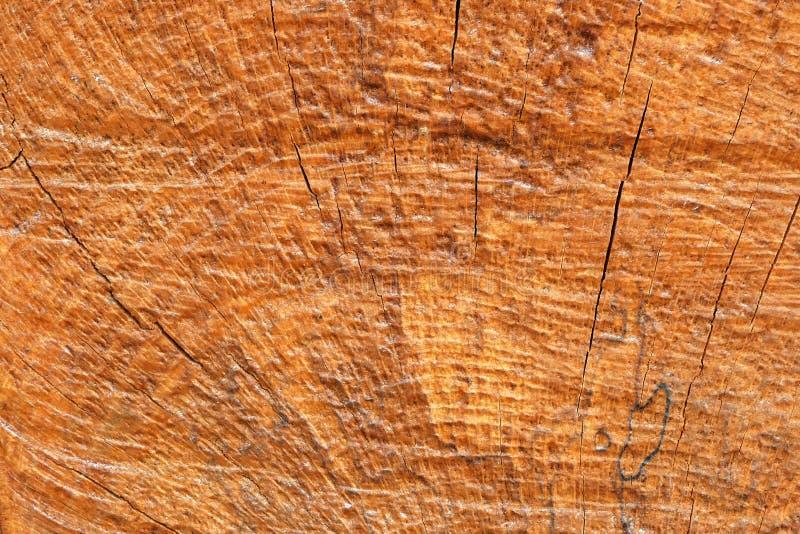 老自然木纹理背景 免版税库存图片