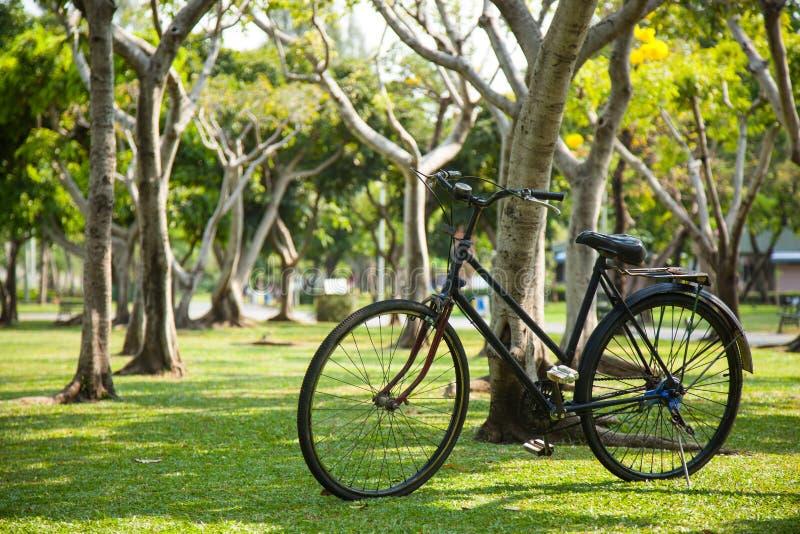老自行车在公园。 图库摄影