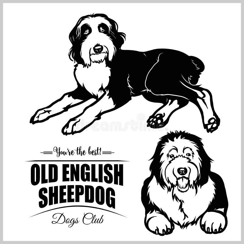 老英国护羊狗-在白色背景的传染媒介集合被隔绝的例证 向量例证