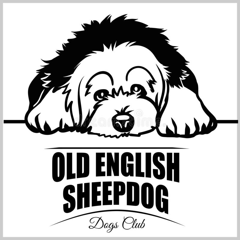老英国护羊狗- T恤杉、商标和模板徽章的传染媒介例证 皇族释放例证