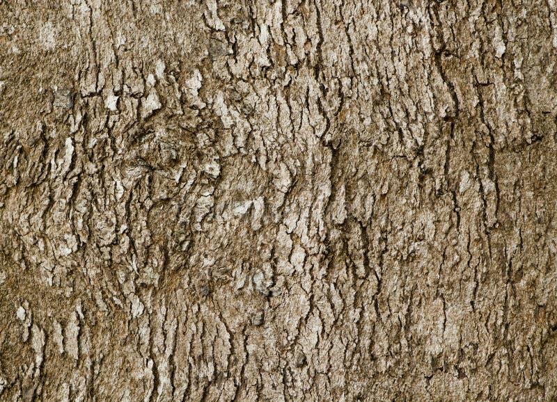 老落叶树-自然本底吠声图片