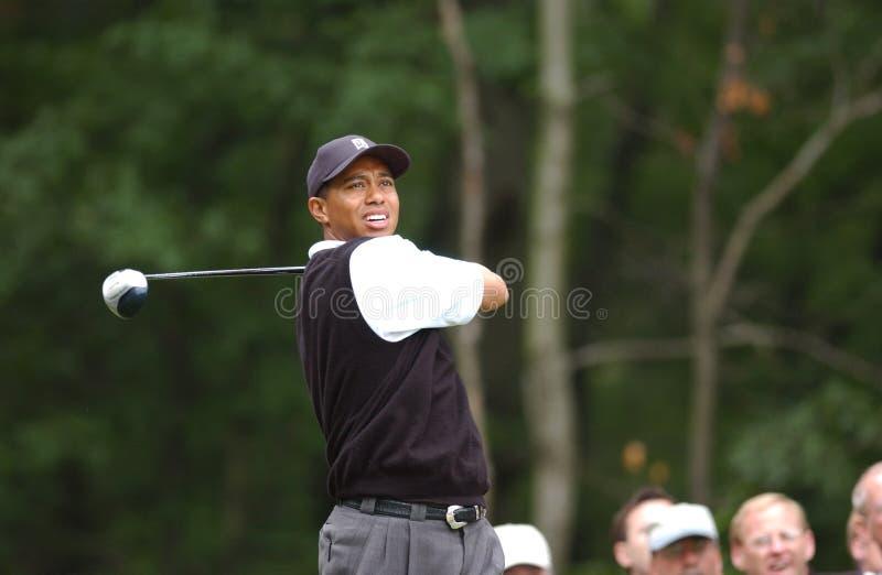 老虎伍兹职业高尔夫球运动员 免版税库存图片