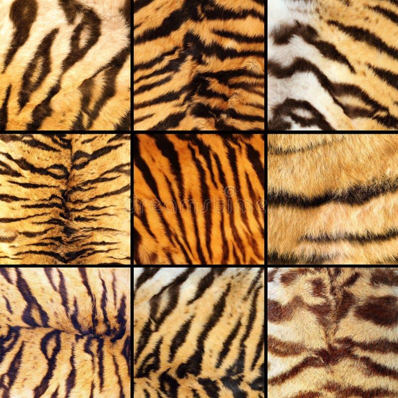 老虎条纹的汇集 库存图片