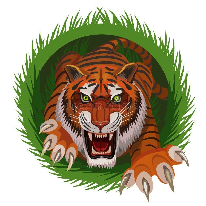 老虎猎人攀登他的牺牲者的草 库存例证
