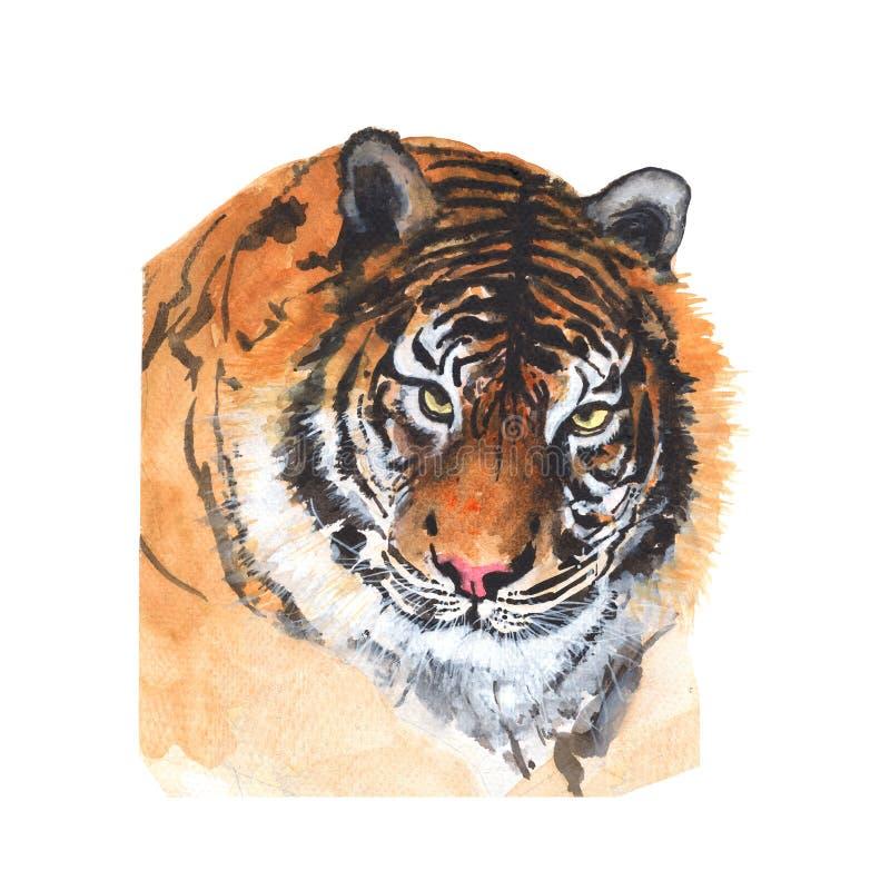 老虎被隔绝的水彩绘画 水彩手画老虎例证 背景例证查出的老虎向量白色 皇族释放例证