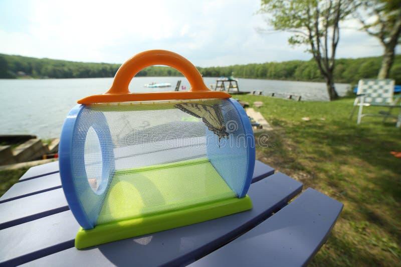 老虎Swallowtail蝴蝶或Papilio glaucas在一只笼子在湖旁边 免版税库存照片