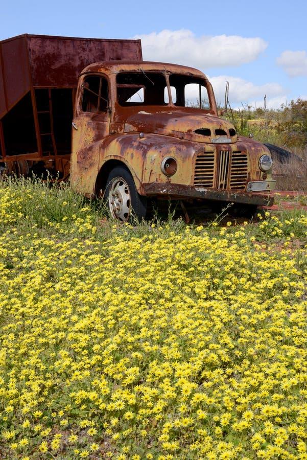 老被放弃的奥斯汀卡车在西澳州 免版税库存照片
