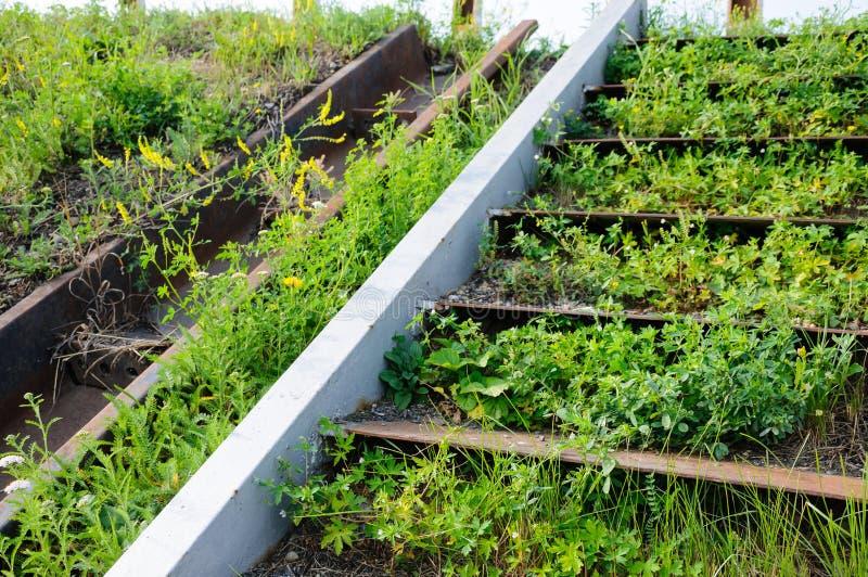 老被放弃的生锈的钢台阶长满与草 免版税库存照片