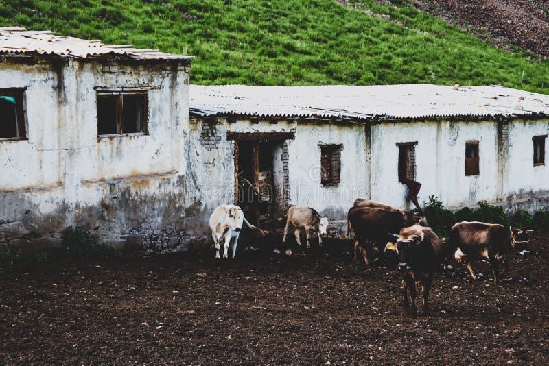 老被毁坏的农场,牛棚,位于高地 免版税库存图片
