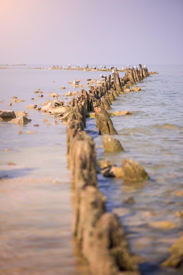 老被毁坏的委员会和日志从海码头或篱芭在海水 免版税图库摄影