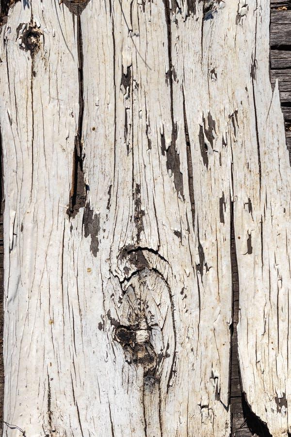 老被绘的白色木板抽象背景  绘剥皮和切削,自然样式纹理,被碾压的样式 库存照片