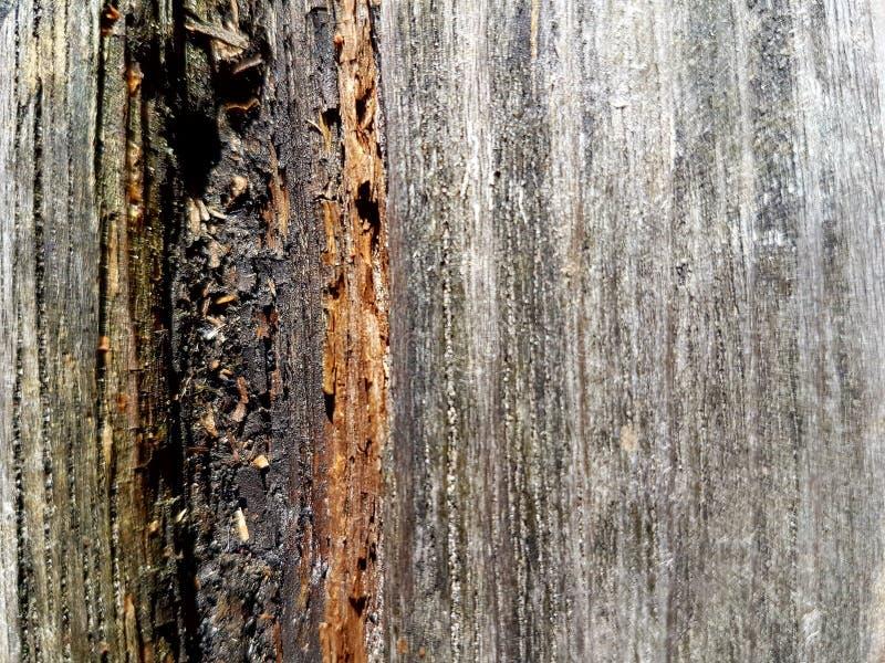老被风化的木头纹理  免版税图库摄影