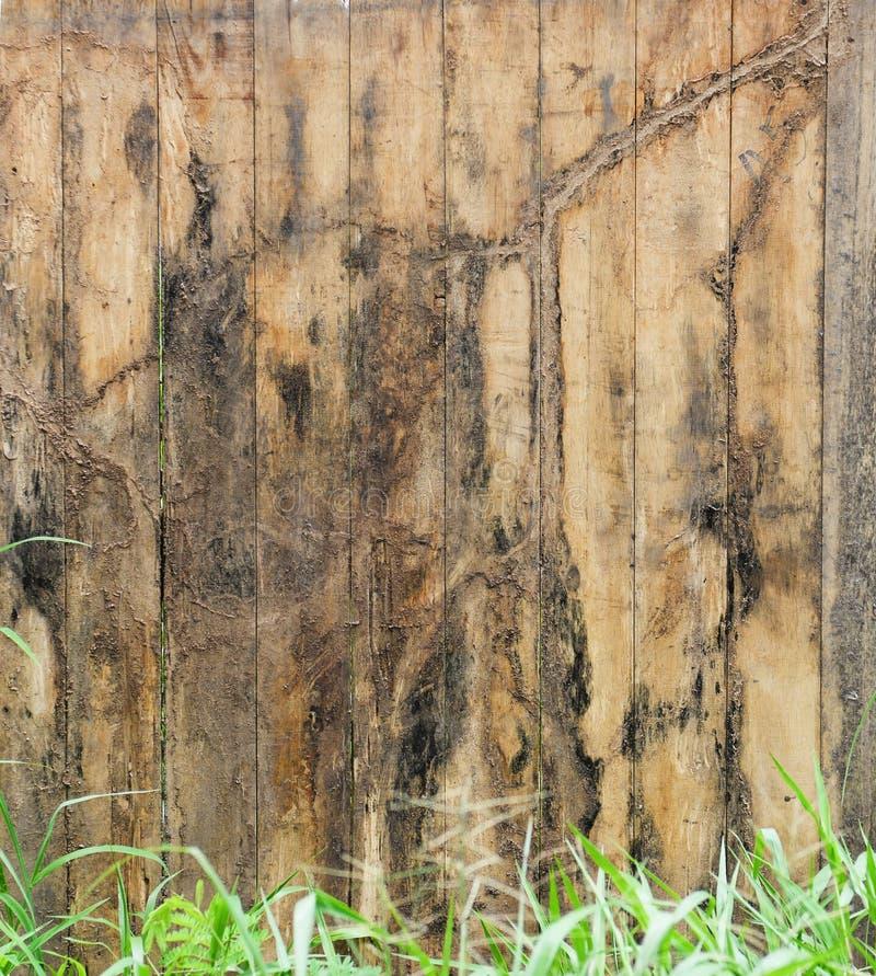 老被风化的木头 库存图片
