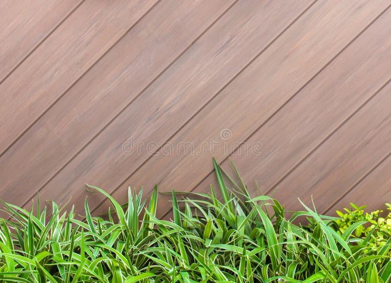 老褐色-灰色木墙壁和新绿色叶子背景a 免版税库存图片