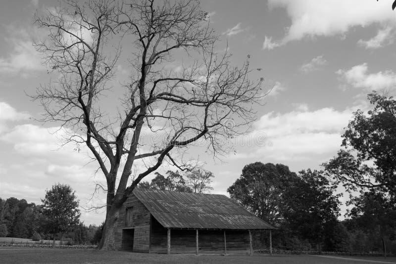 老谷仓和一棵贫瘠树 库存照片
