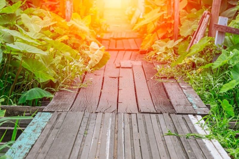 老道路木桥梁在与发光的光的深森林横穿水中 库存图片