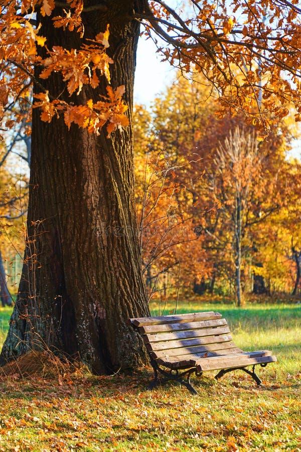 老长木凳身分在一个橡树下在城市公园 库存图片