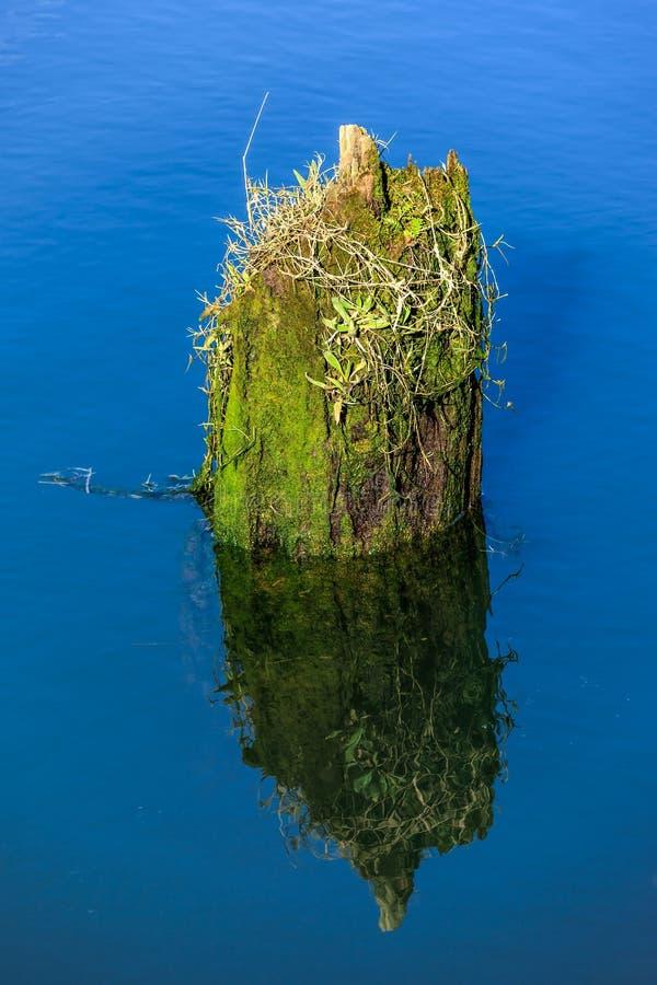 老青苔在水中盖了打桩 库存图片