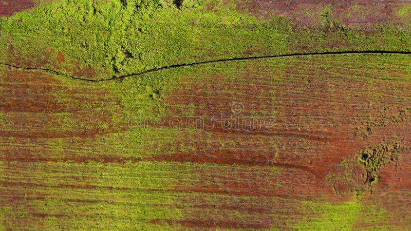 老青苔木质的背景 库存照片
