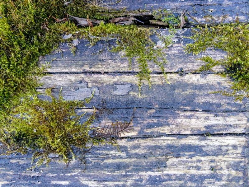 老风化了用绿色青苔盖的木板条 图库摄影
