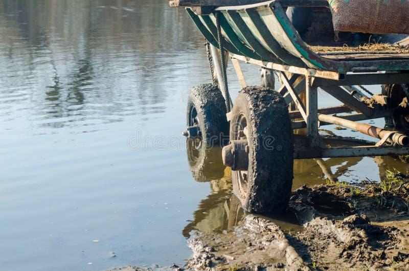 老马推车在水中站立 图库摄影