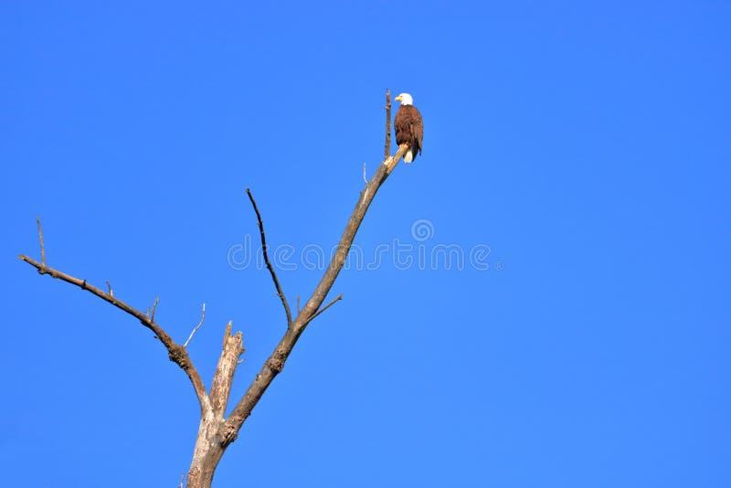 老鹰和全球性变暖标志 免版税库存照片