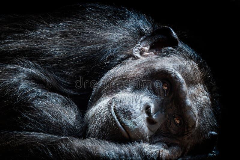 老黑猩猩平底锅穴居人 图库摄影