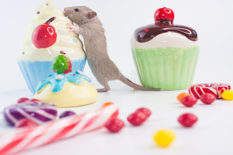 老鼠用杯形蛋糕 在甜点背景的鼠  免版税库存图片