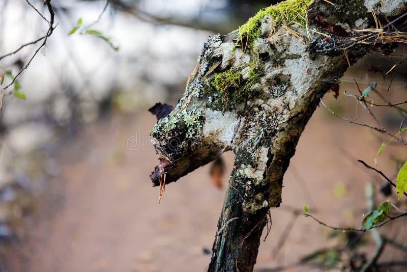 老,腐烂的树枝 库存图片