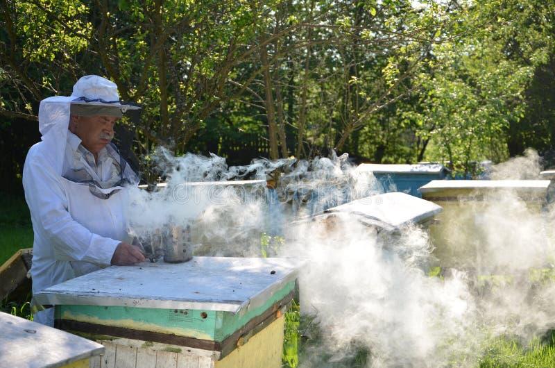 老练的资深养蜂家放在蜂吸烟者的火 免版税图库摄影