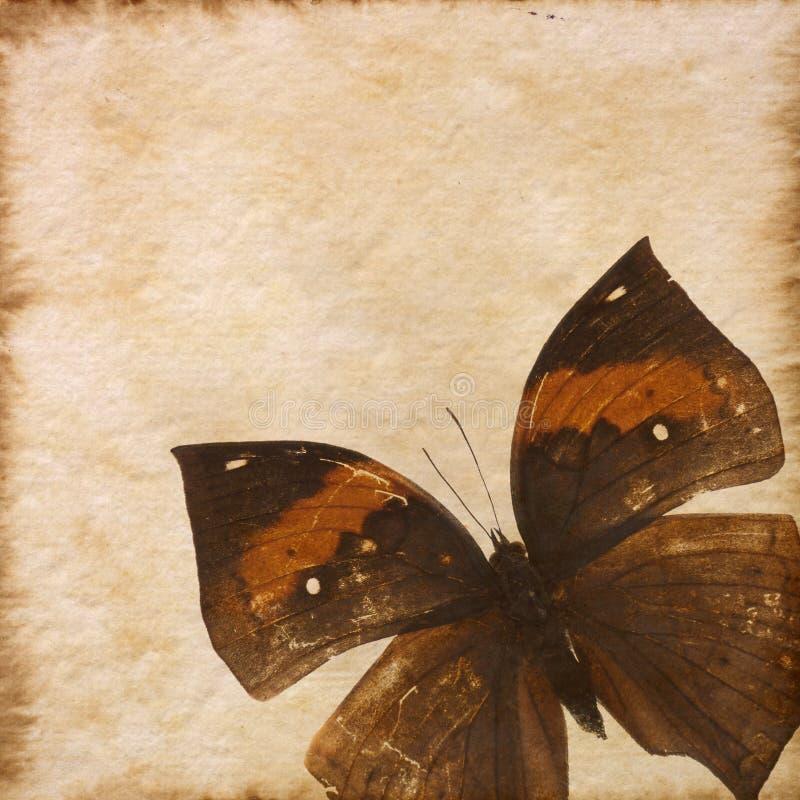 老grunge蝴蝶纸张纹理 皇族释放例证