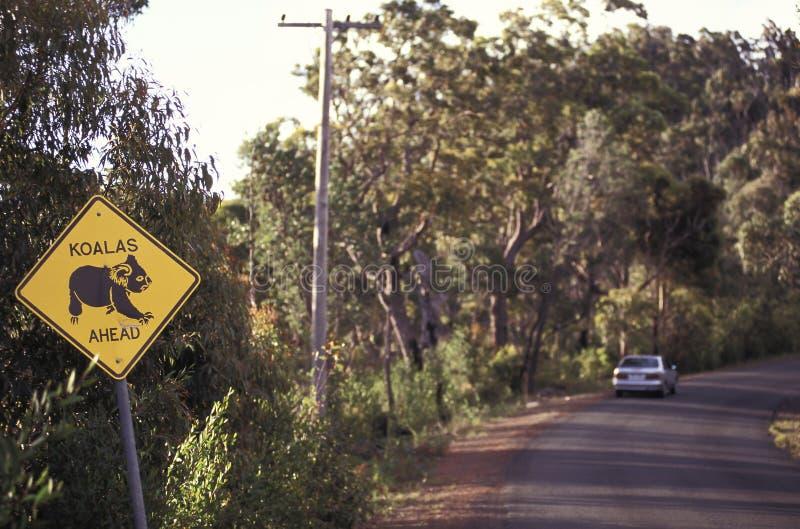 考拉横穿路标,澳大利亚 图库摄影