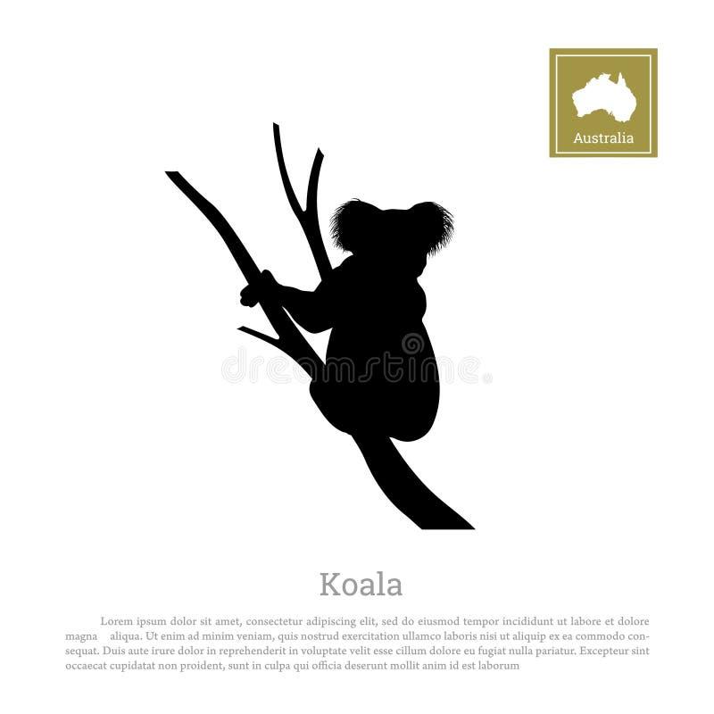 考拉黑剪影在白色背景的 澳大利亚的动物 皇族释放例证