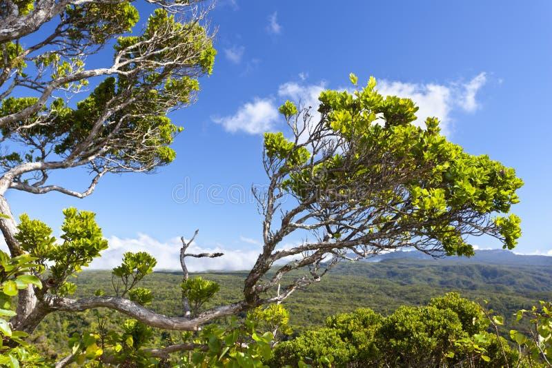 考艾岛高地,夏威夷 免版税库存图片