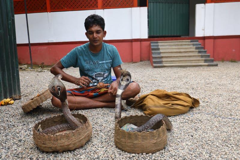 耍蛇者在斯里兰卡 库存照片