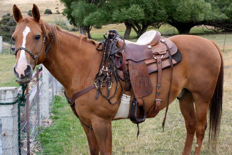 耐心地等待的短距离冲刺的马去工作。 库存照片