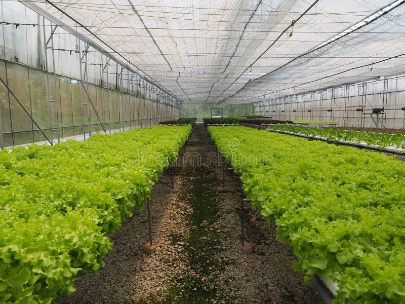 水耕的菜农场 免版税库存照片
