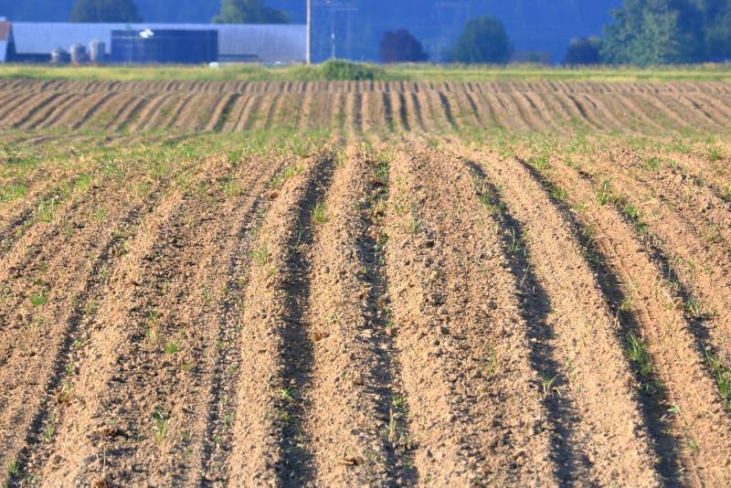 耕种和农业风景 库存图片