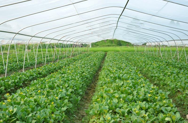 耕种温室 库存图片