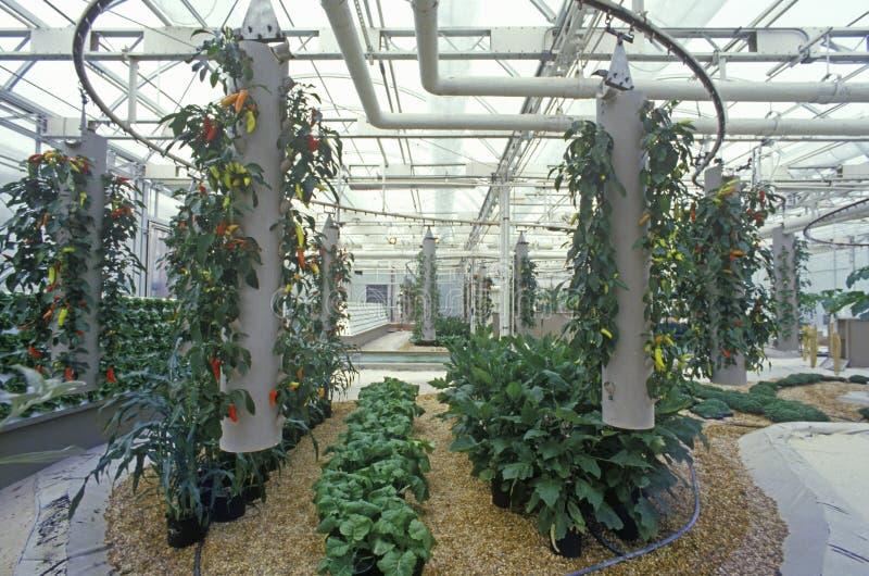 水耕种田在EPCOT中心, FL 免版税库存照片